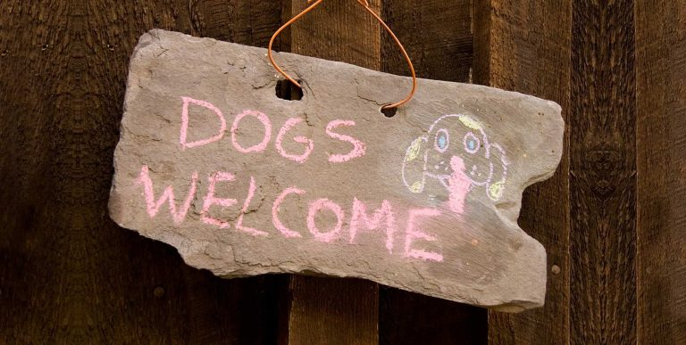 Dogs-Welcome-174895732_4185x2111