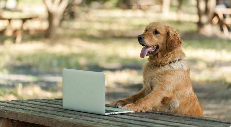 dog-using-a-laptop-587813664_3869x2130